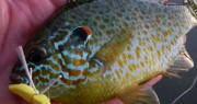 Bluegill, Panfish and Bass Fly Fishing on Local Lakes Near Traverse City