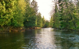 Boardman River Trout Fishing - Traverse City, MI