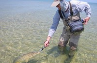 Guide Trips - Fly Fishing for Carp