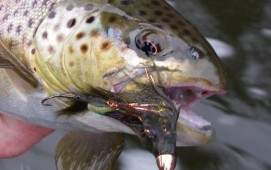 Streamer Fishing Tips for Trout