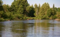 Upper Manistee River and Deer