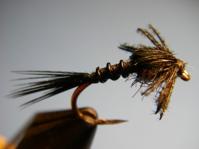 Early Black Stonefly Nymph