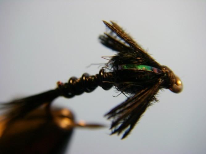 Early Black Stonefly Nymph Optional Step - 7.5
