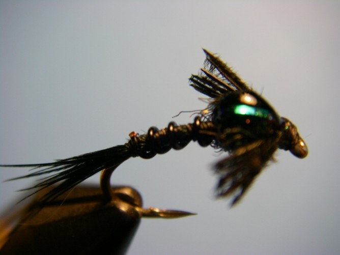 Early Black Stonefly Nymph Optional Step 9.5