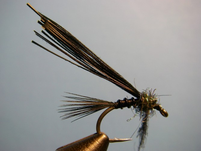 Early Black Stonefly Nymph Step - 5