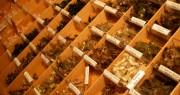 Top 5 Steelhead Flies - Fly Bin Selection