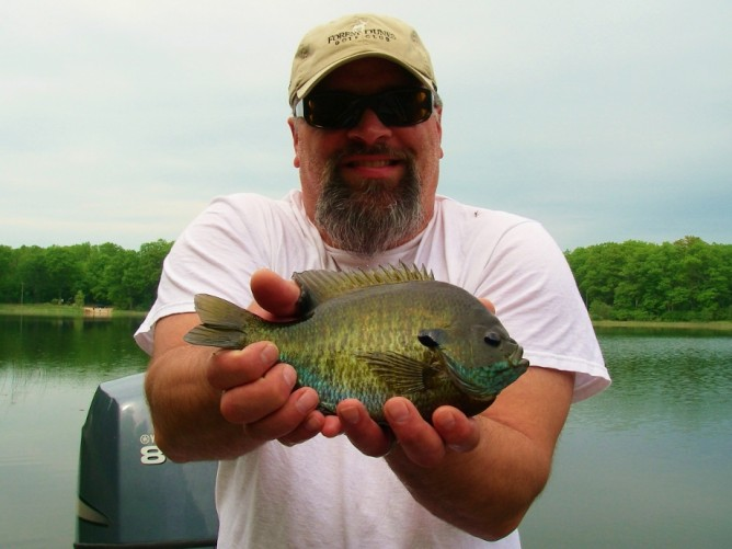 Carp current works guide service for Fly fishing for bluegill