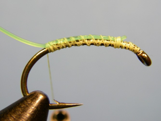 Green Caddis - Dubbed - Step 2