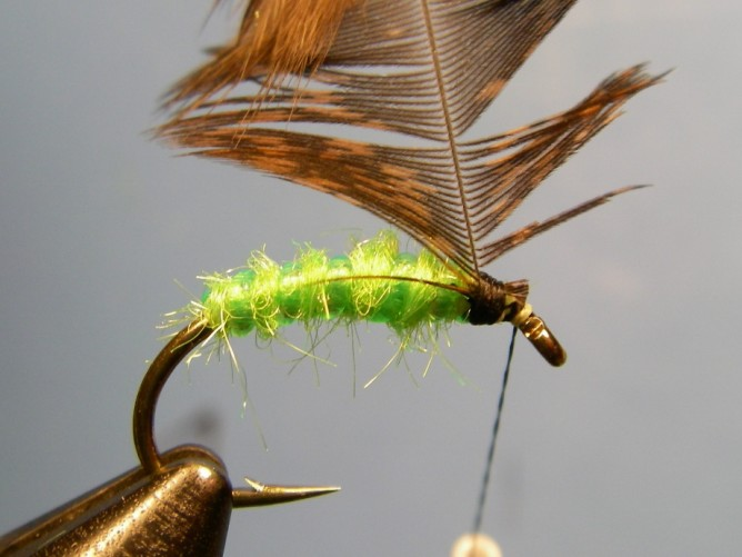 Green Caddis - Dubbed - Step 5